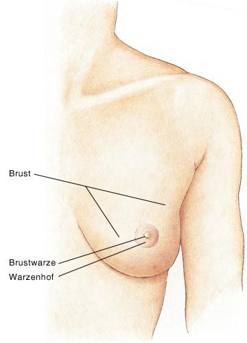 Ewalar die Erhöhung der Brust