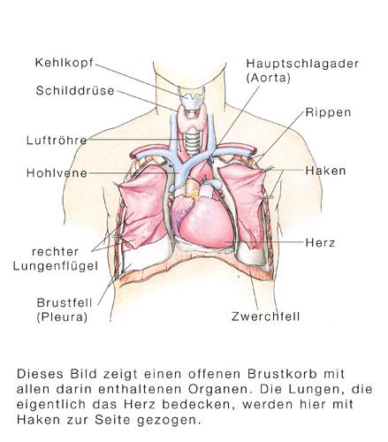Wie Rauchen dem Rcken schadet - special-rueckenschmerzde