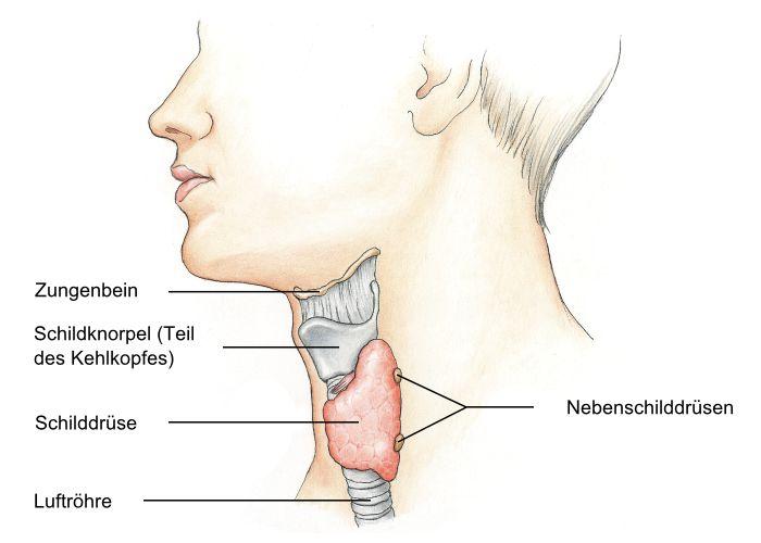Nebenschilddrüsenunterfunktion, Hypoparathyreoidismus - eesom ...