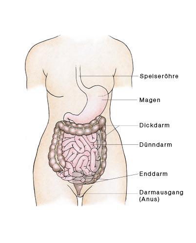 Dünndarm, Dickdarm, Darm - eesom Gesundheitsportal