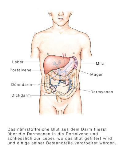 Galle in den Magen-Würmern