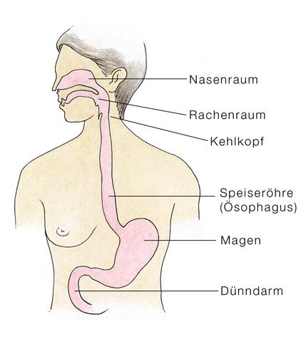 Speiseröhre (Ösophagus) - eesom Gesundheitsportal